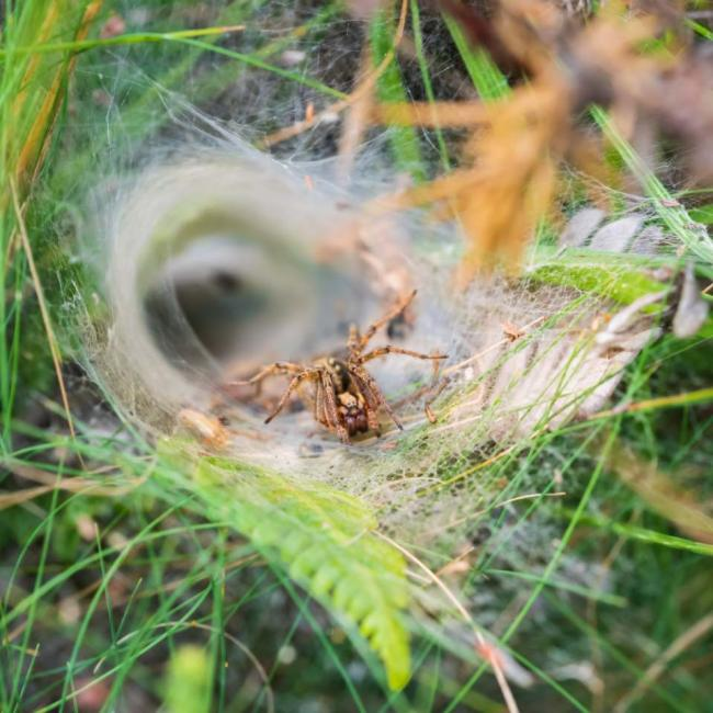 Labyrinth spider, taken by Mark Quilter