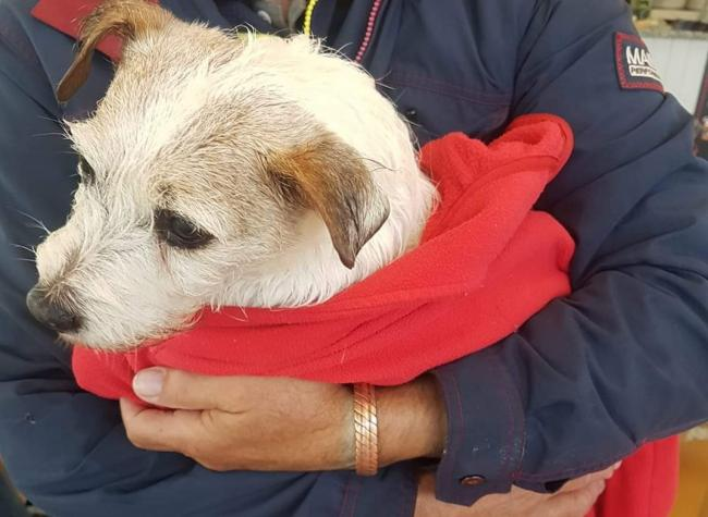 The shivering Jack Russell rescued from the Helston boating lake. Photo: Coronation Park