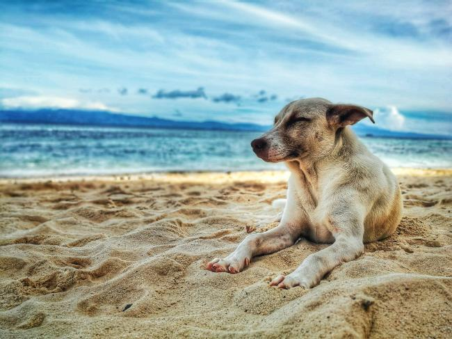 Dogs on beaches - Kennel Club's reaction