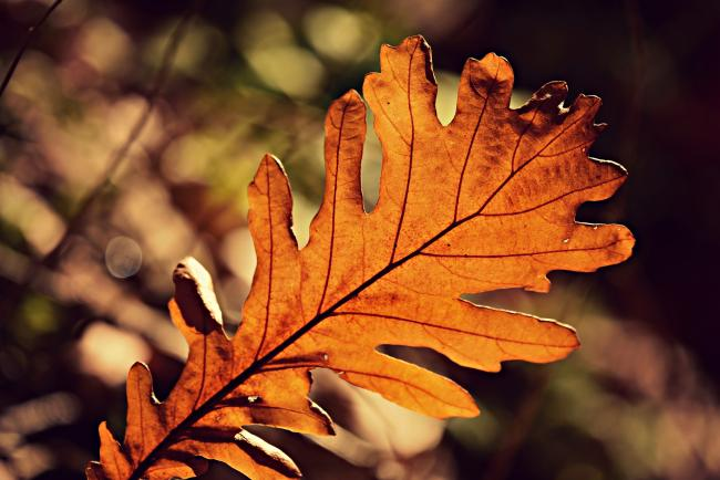 This is why are people calling for an autumn bank holiday. Picture: Pixabay