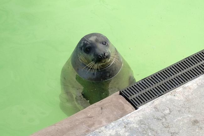 Love Island star becomes ambassador for seal sanctuary