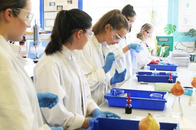 A Level biologists undertake research in the lab