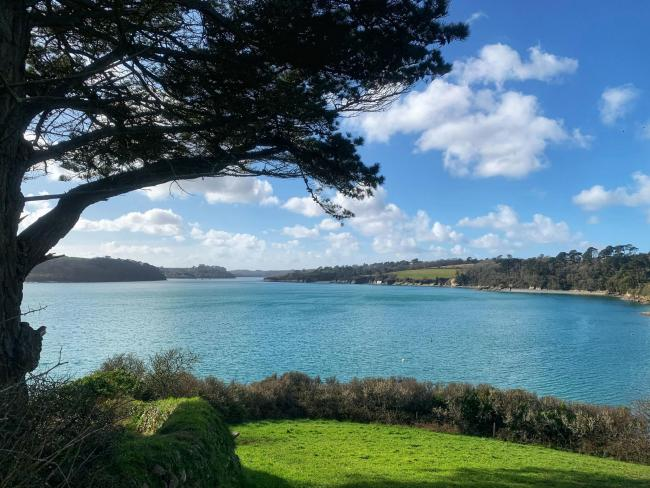A view from the Helford stretch of Gail's walks
