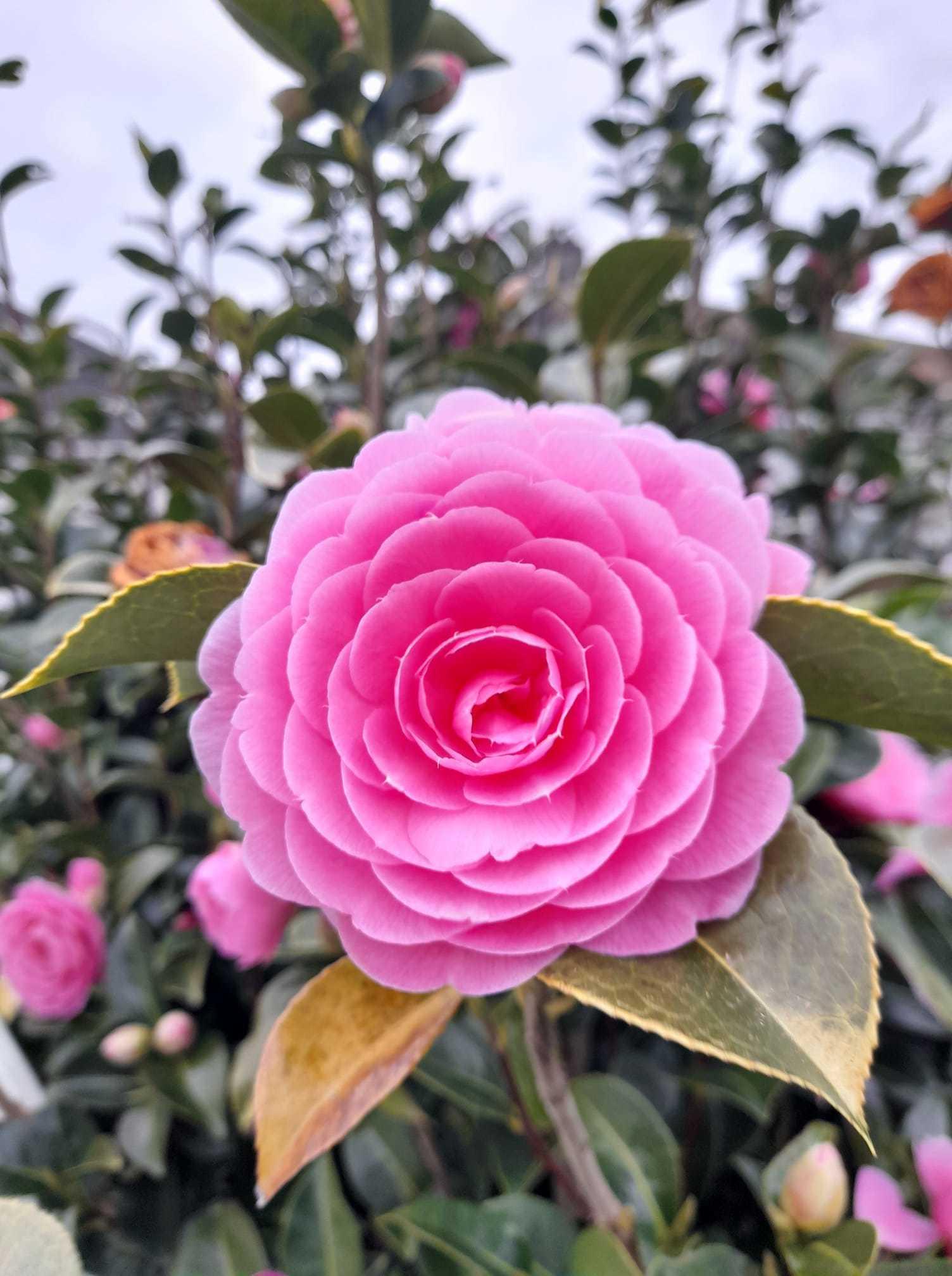 Beautiful blooming flower, by Graham Calvert