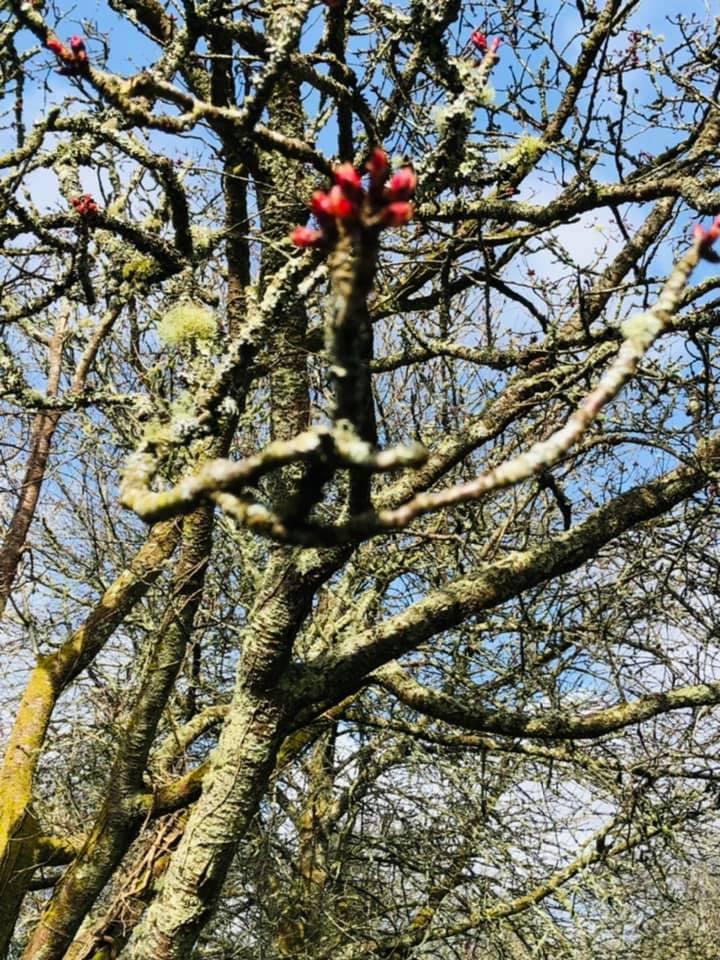 New buds, new beginnings, by Mandie Burton