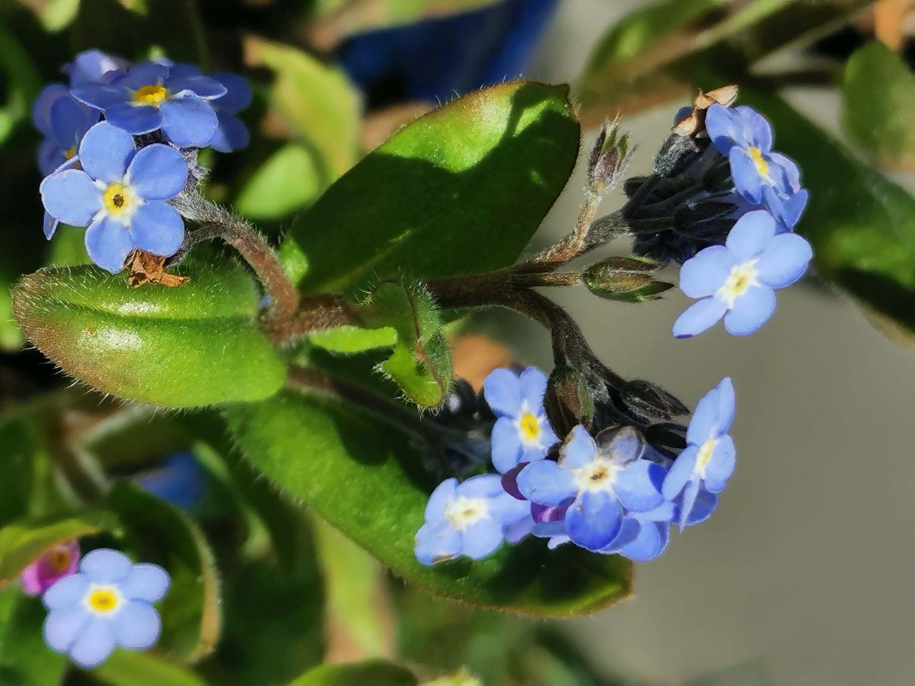 Spring has sprung, by Tina Richards