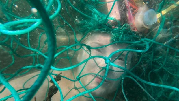 Falmouth Packet: Ocean Rebellion calls on the public to support the ban on bottom trawling around the UK coast.
