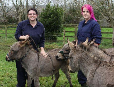 Lisa Grenfell from Penzance and Jae Leaver from Falmouth grooming the miniature donkeys.