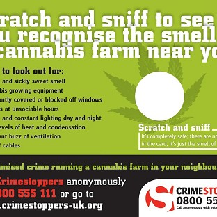 Figures show an increase in the detection of cannabis farms.