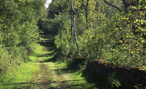 Can you help preserve Falmouth's footpaths?