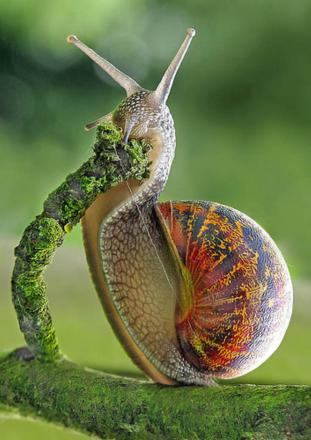 Friday Funny: How to get rid of those pesky snails from your garden