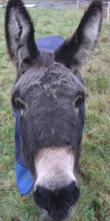 Fancy a trip to the Donkey Sanctuary with Falmouth Health Centre friends group?