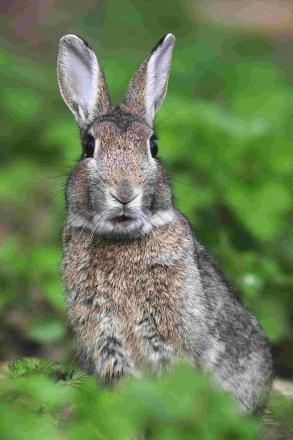 Rabbits uncover 5,000 years of human activity at Land's End.