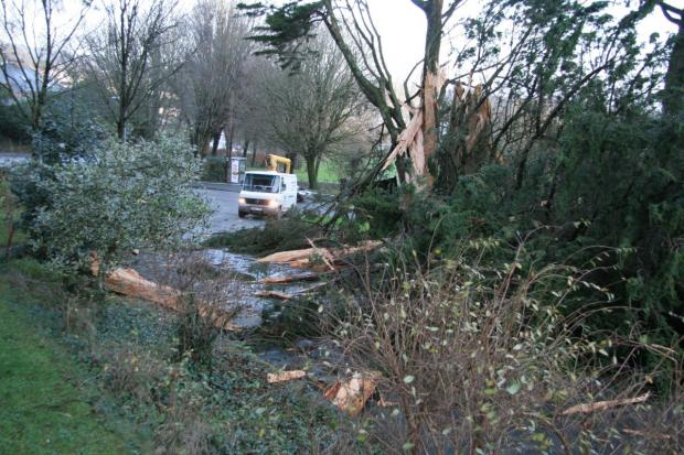 Fallen power cables and a fallen tree at A39 at Dracaena Avenue: UPDATE