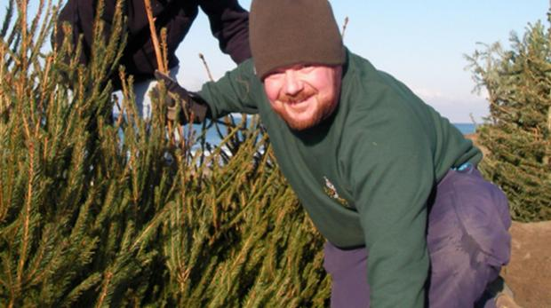 Over 100 people help bury Christmas trees in Porthtown sand dunes