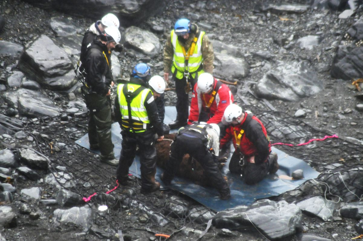 Dramatic rescue of calf that fell 100 feet down cliff after Lizard landslip: PICTURE + VIDEO