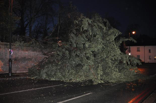 Wild winds cause traffic mayhem as trees and power lines tumble: DETAILS