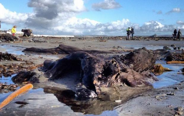 Evidence of ancient forest exposed on beach at Mount's Bay: PICTURES