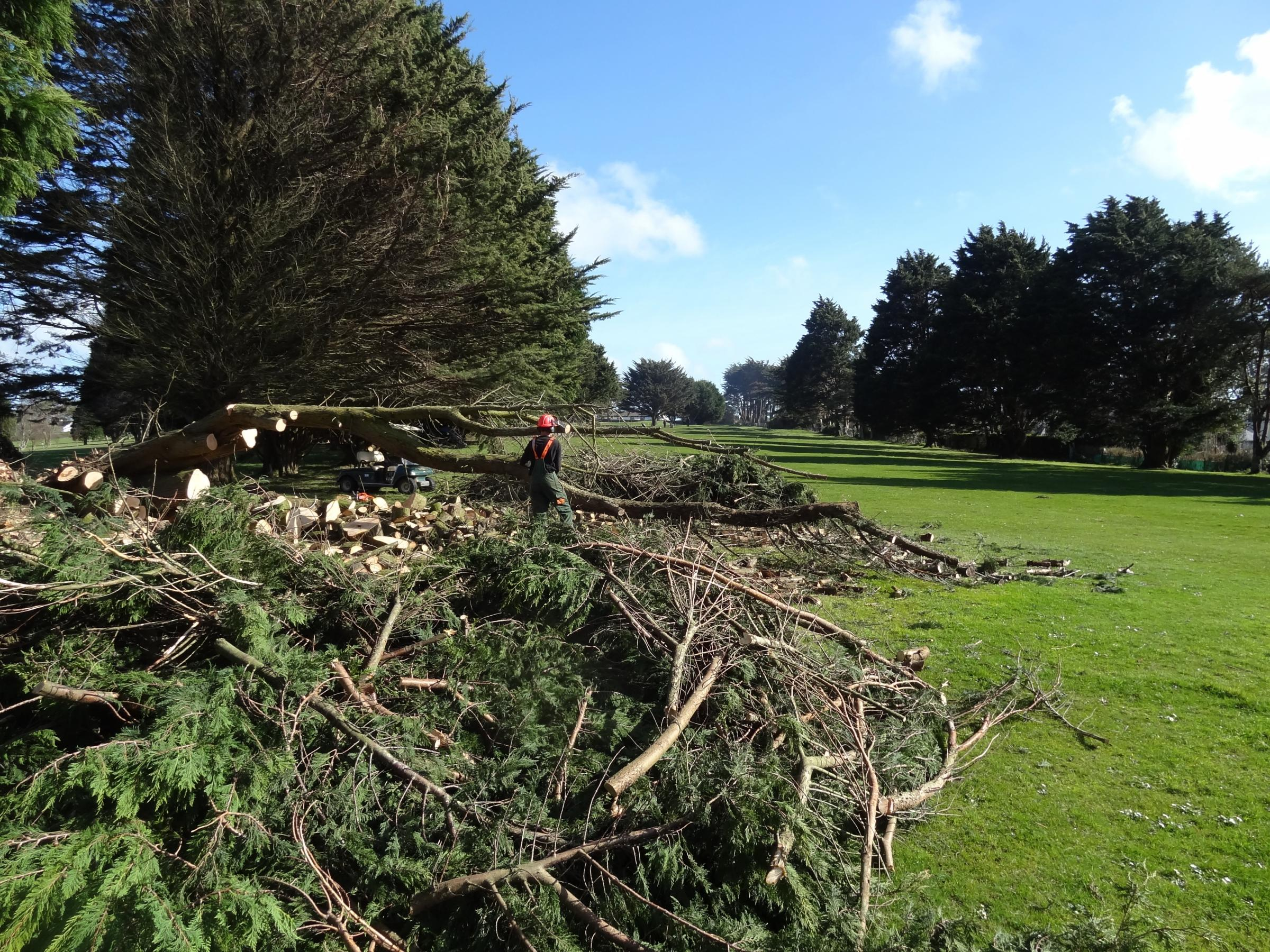 Storms fell 14 trees at Budock Vean Golf Club