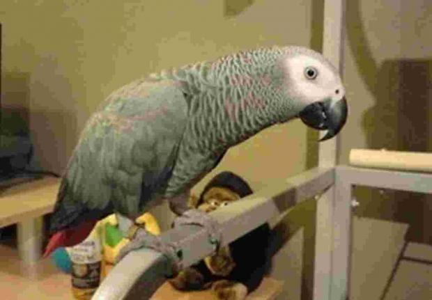 Can you help find Floyd the missing Penryn parrot?
