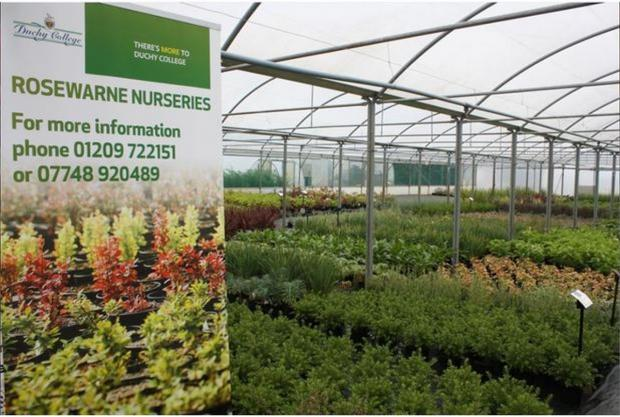 Duchy College nursery opens its doors to public for plant sale