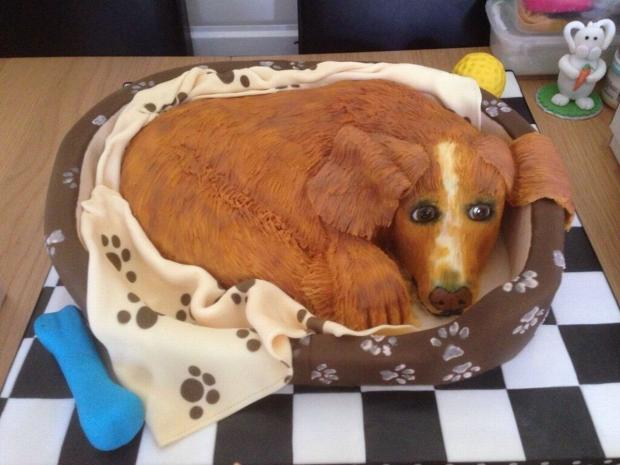 Cute spaniel is actually made of cake