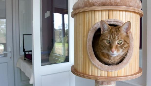 'Catnip bubble play sessions' as UK's first five star cat hotel opens near Truro