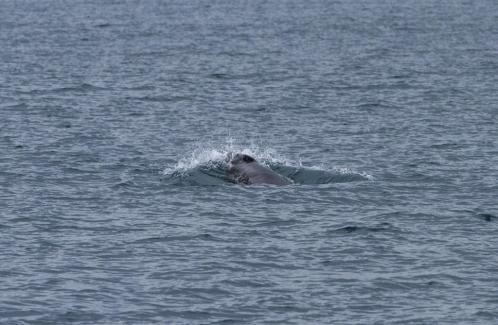 First Minke whale spotted off Falmouth: PICTURES