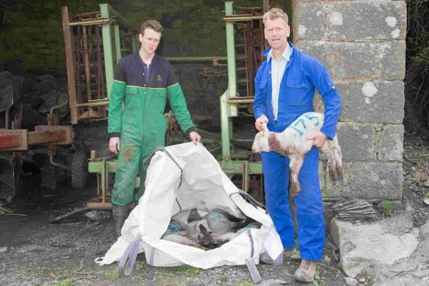 Farm worker Ben Coleman and farmer Hugh Dawson with the dead lambs