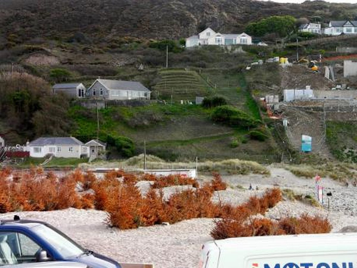 Council finally agrees to remove dead trees from Porthtowan dunes
