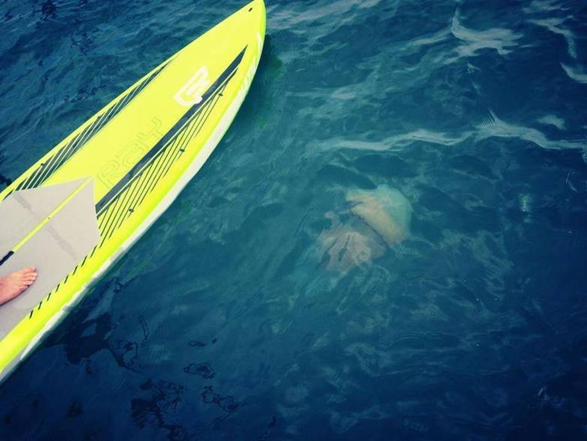 Giant jellyfish spotted off Falmouth beach: PICTURE