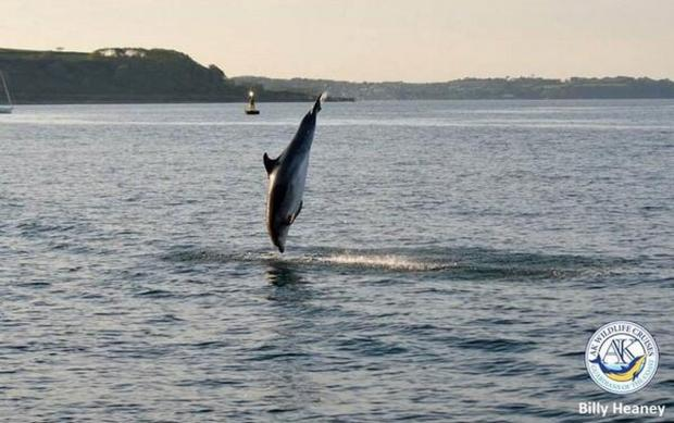 Sunny weather making you jump for joy? As much as this dolphin in Falmouth