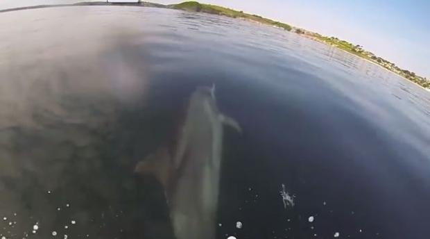 Dolphin comes to play in Falmouth Bay: VIDEO