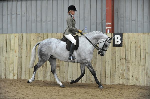 Alicia riding The Grey Prince. Picture: SMRPHOTOS.CO.UK
