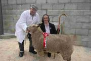 Record entries for 144th year of Helston Fatstock Show: PICTURES