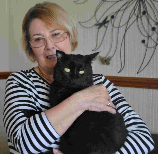 New life for cat found living in mattress in Penryn