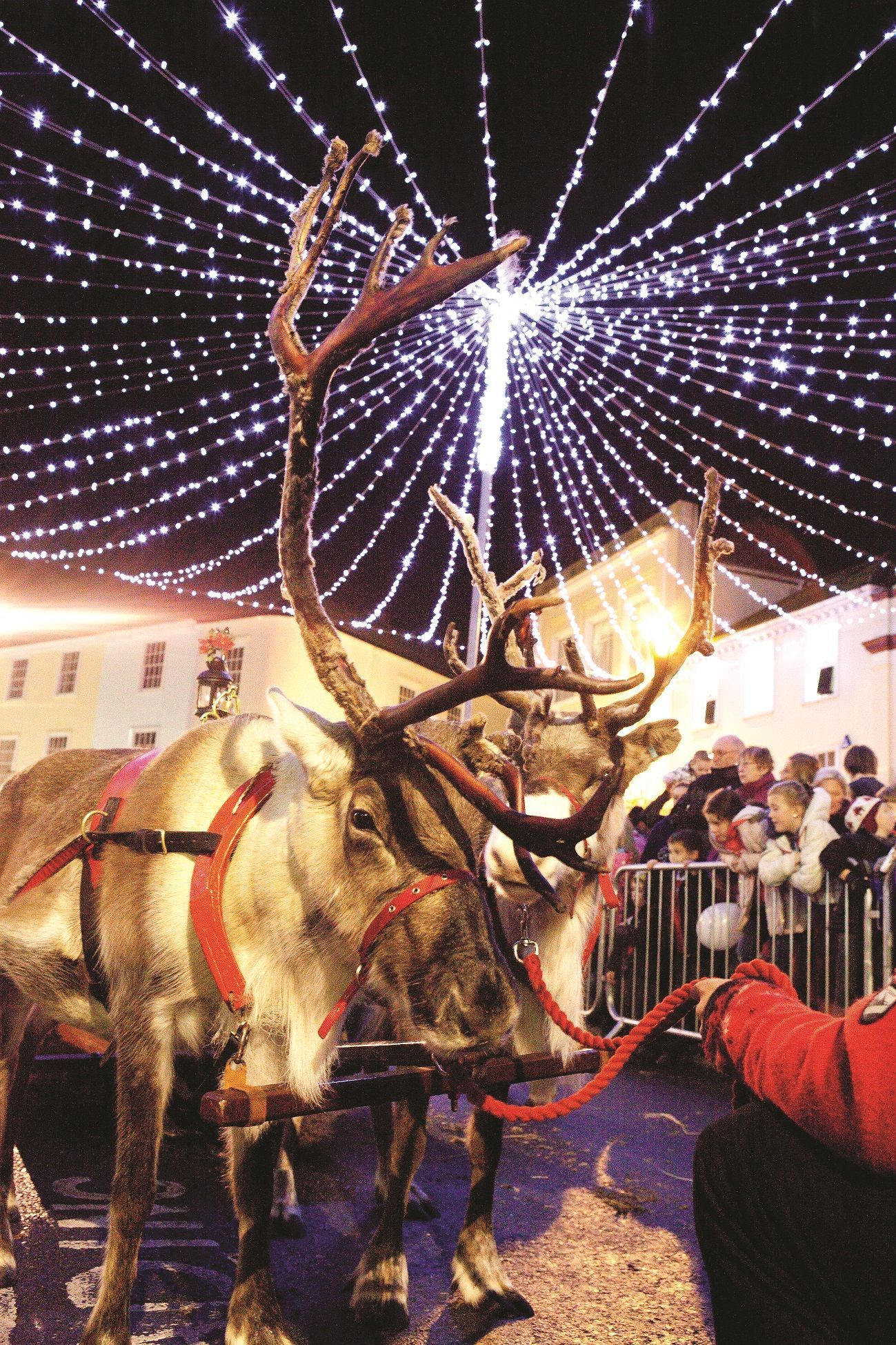 Truro's reindeer parade will take place on November 29