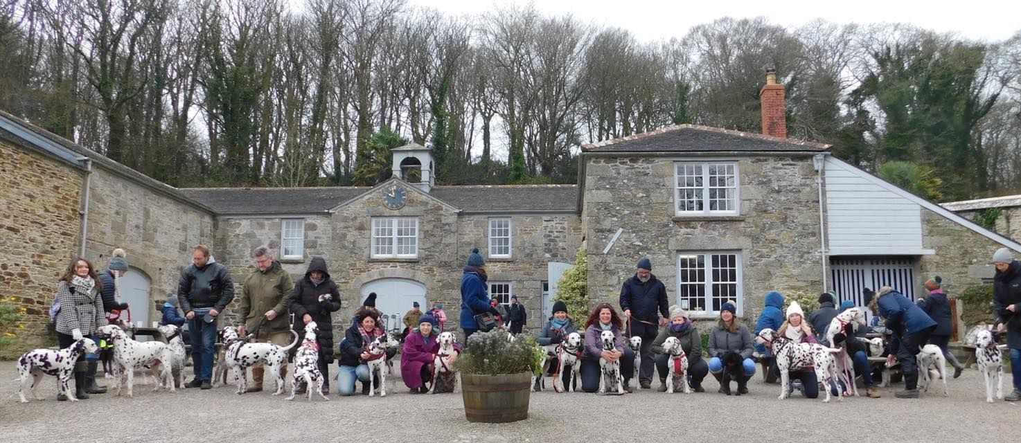 The 22 dogs and their owns who took part in the Helston Dally Rally