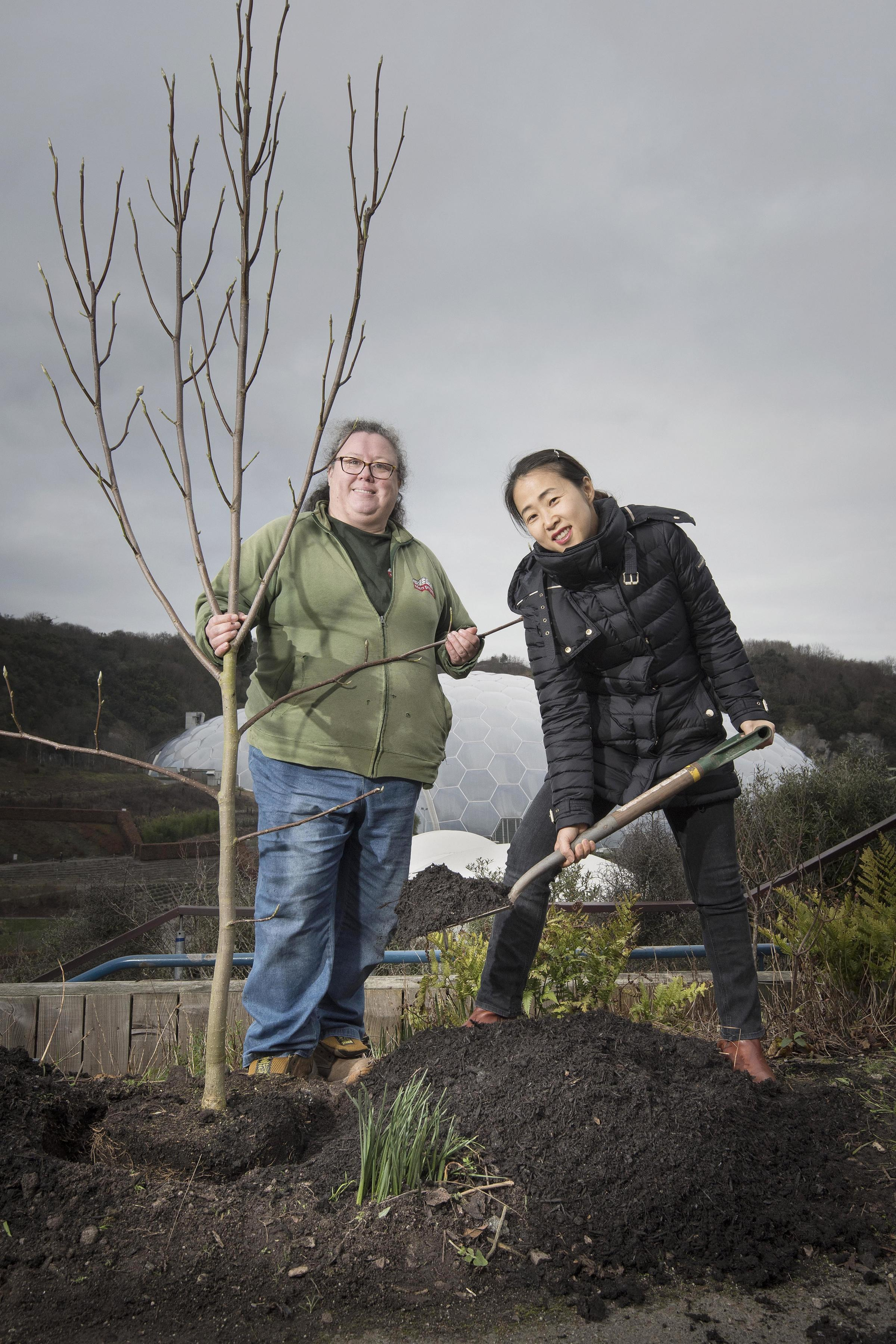 Photograph by Emily Whitfield-Wicks Tree planting in the New Korean Garden. Eden Project. Rep from Korea Hyeyoung Jin and Garden Lead Hort Julie Kendall planting the Magnolia Seiboldii tree.