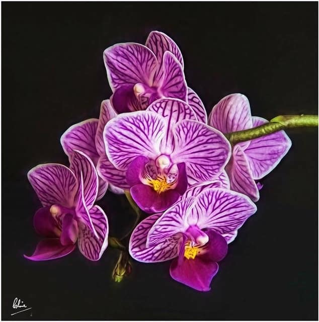Orchid, taken by Clive Kingsley