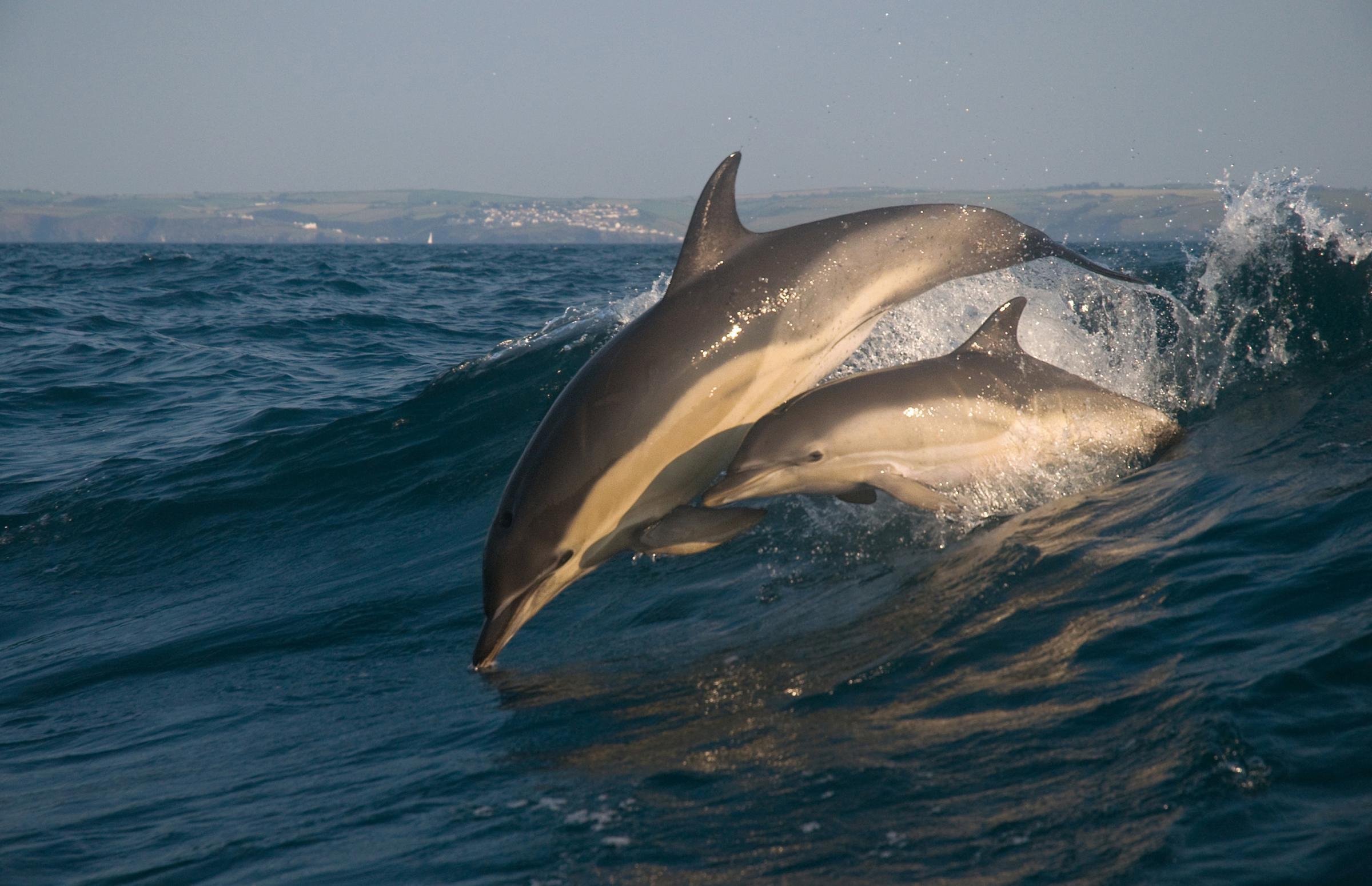 Frugi donates £13,000 to Cornwall Wildlife Trust