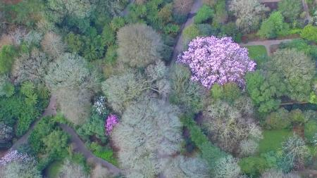An overhead view of Trengwainton Garden, near Penzance