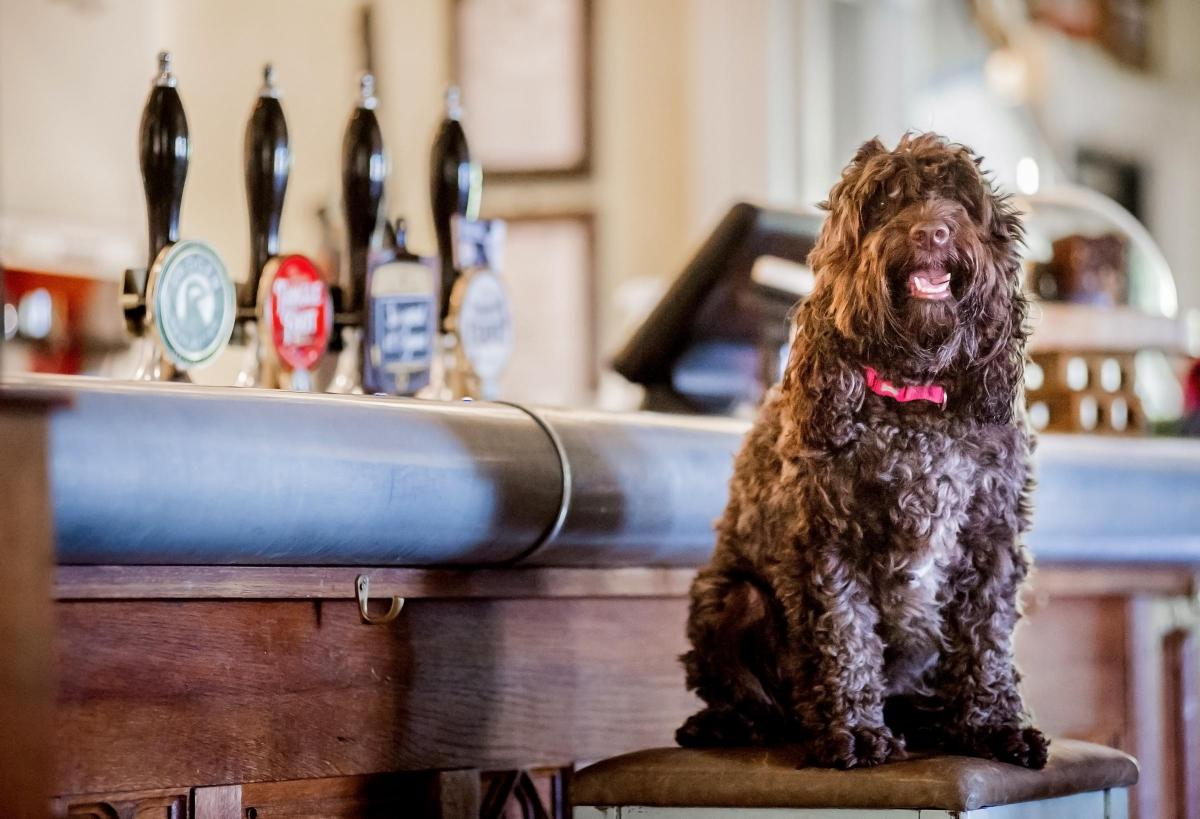 Search to find Cornwall's most dog-friendly pub of the year