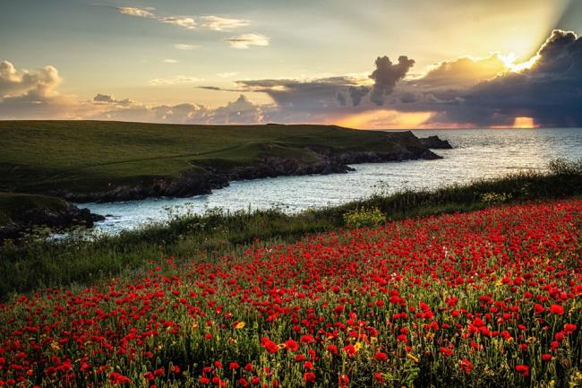 Poppies, poppies everywhere. Taken by Dom Haughton